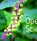 OSDC_LifeScience_OpenScience_520x292_12268077_0614MM